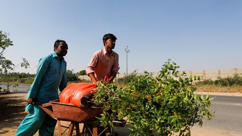 Pakistan's virus-idled workers hired to plant trees | Pakistan ...