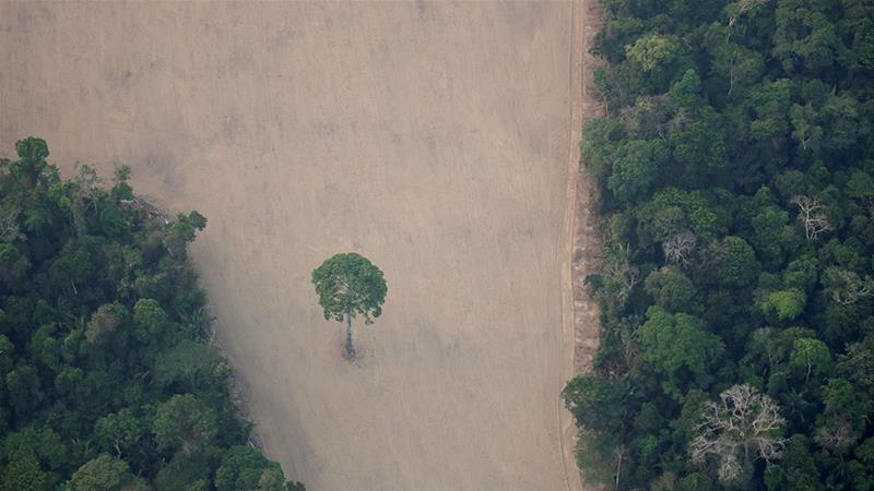 Brazilian Amazon deforestation hits new Jan-Apr high