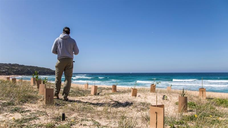 Australian Beach Life At Risk As