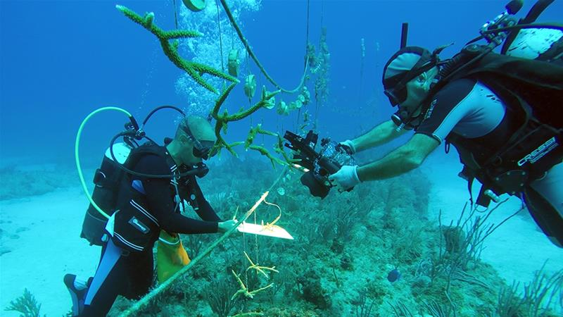 Divers check a coral reef being raised for research by the National Aquarium of Cuba in Havana, Cuba [Stringer/Reuters]