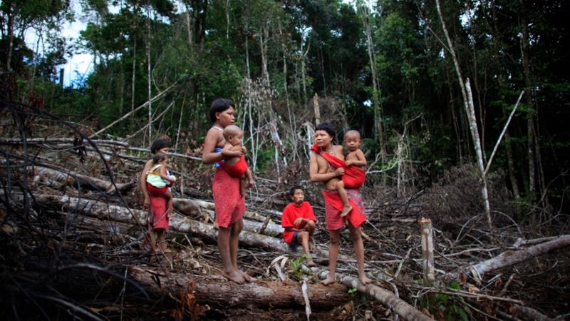 Indigenous tribes like the Yanomami have been threatened by a new gold rush in the Brazilian areas of the Amazon [File: Ariana Cubillos/The Associated Press]