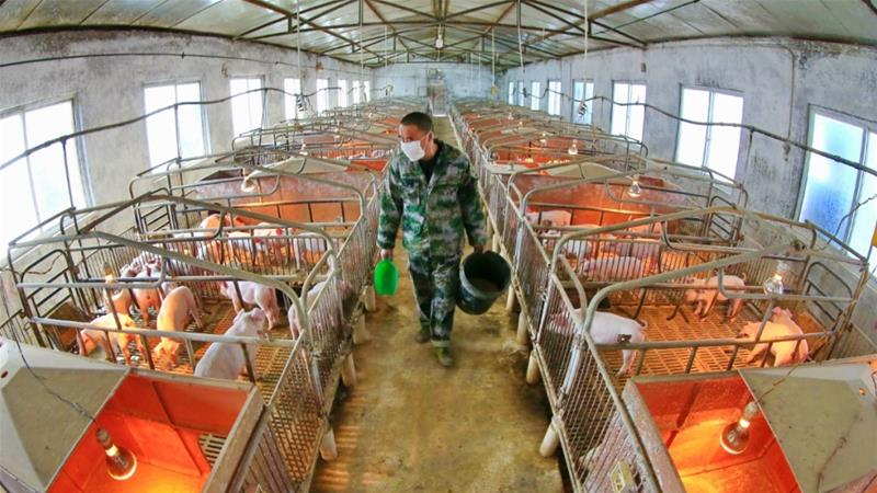 Swine flu with 'human pandemic potential' found in China