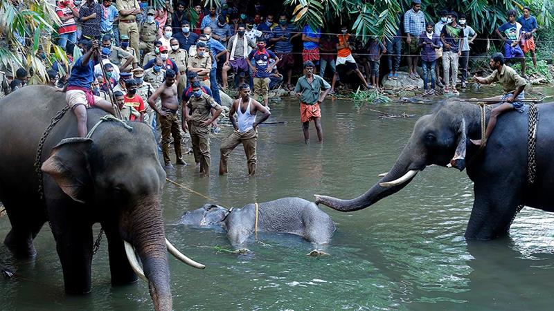 This photograph taken on May 27 shows policemen and onlookers standing on the banks of the Velliyar River in Kerala's Palakkad district as the dead elephant is retrieved [File: AFP]