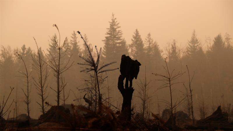 Fire-damaged forest is seen in the aftermath of the Riverside fire that ravaged Clackamas County in Estacada Oregon the United States