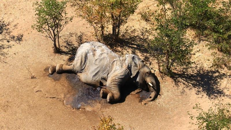 The number of dead elephants rose to 330, from 281 when last reported in July [File: National Park Rescue via AFP]