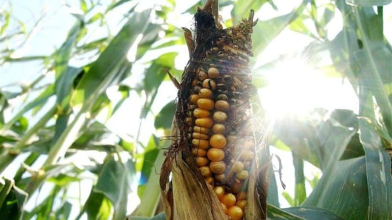 Biofuels  made from corn and other foodstocks compete for land and water, putting added stress on scarce resources [AP]