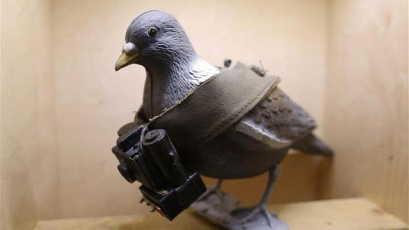 "Britain has awarded 32 pigeons with medals ""for conspicuous gallantry [or] devotion to duty"" in wartime [REUTERS]"