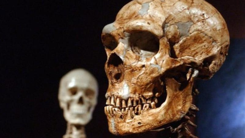 Neanderthals were just as clever as their human contemporaries, a Dutch study says [AP]