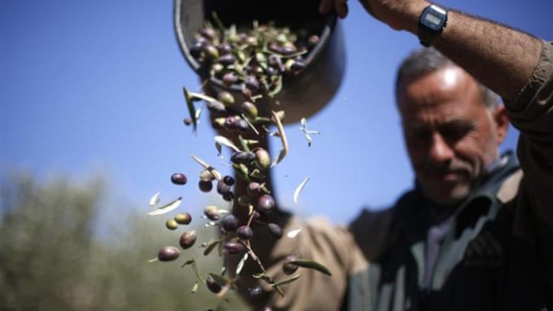 Some 50 percent of Palestinian households are suffering from food insecurity. [Reuters]