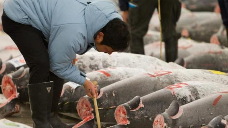 Fish-hungry Japan slashes tuna catch by 50% | Asia Pacific