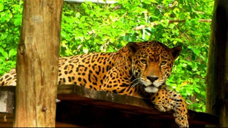Planet SOS: Guatemala's illegal animal trade