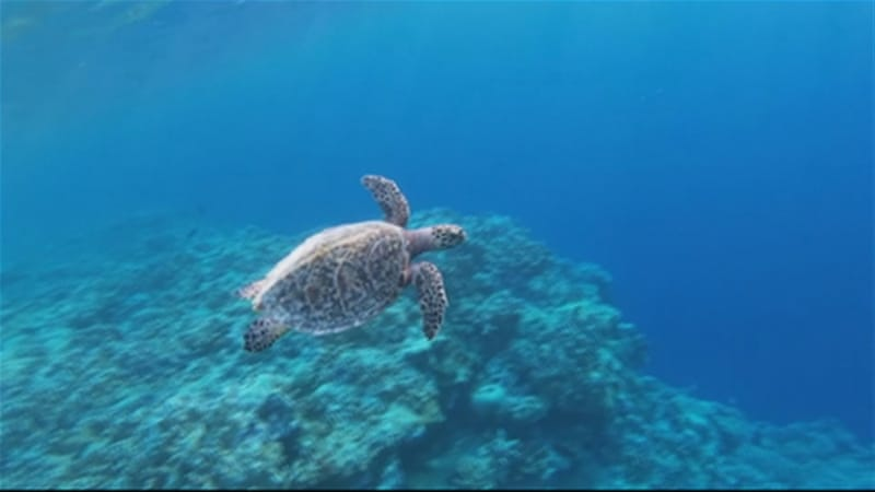 Seychelles sets up protection for 30 percent of surrounding sea