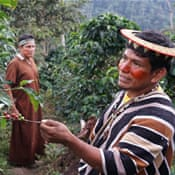 Fair trade for Peru's indigenous coffee growers?