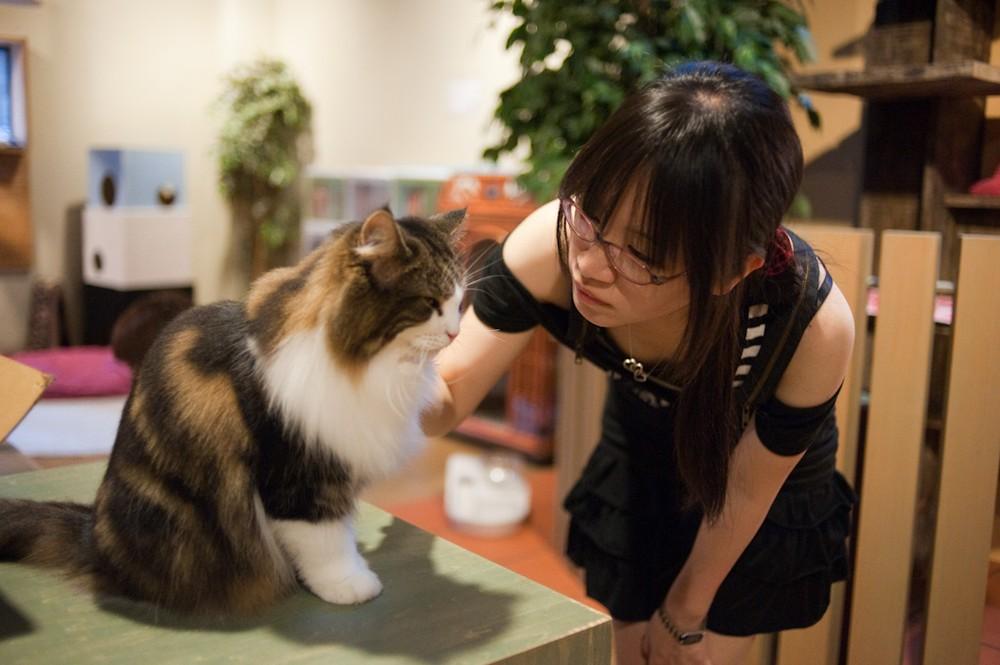 Как японцы называют котов?