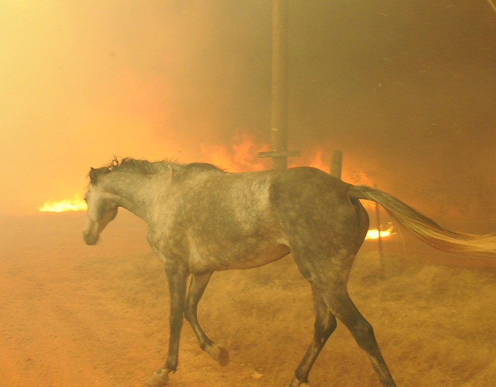 3 August: A horse tries to escape a wildfire burning in the eastern part of  Cleveland County,  Slaughter, Oklahoma, US.