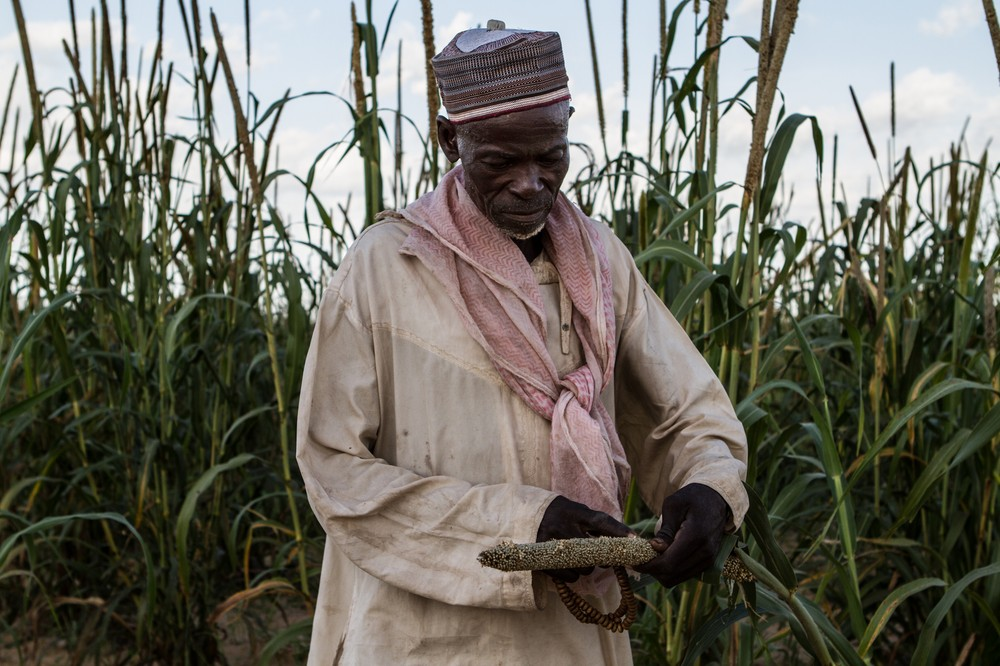 A farmer examines grain that has gone bad on his land