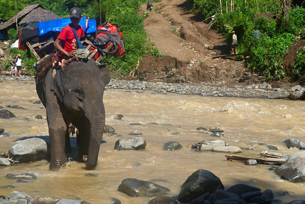 <p>In Myanmar\(***)s challenging jungle terrain, elephants are the ideal form of transport during the monsoon season.</p>