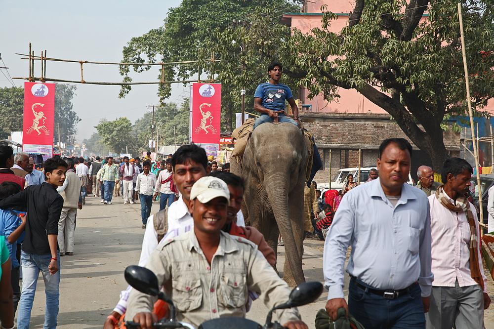 <p>An elephant arrives, along with thousands of visitors, at the Sonepur animal fair in the eastern Indian state of Bihar. </p>