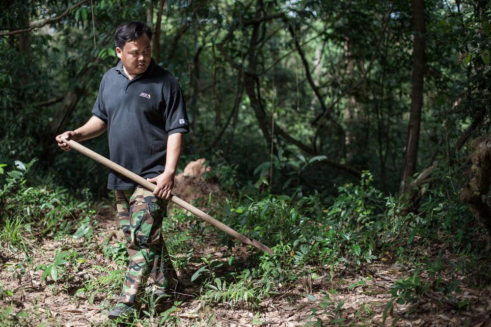 Rith, a spider hunter from a small village in Svay Leur, searches for spider nests in the middle of the jungle of Cambodia.