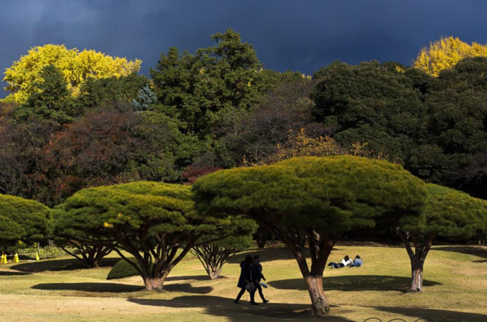 Bright sunshine despite the rain-laden skies above Tokyo\(***)s Shinjuku Gyoen National Gardens.