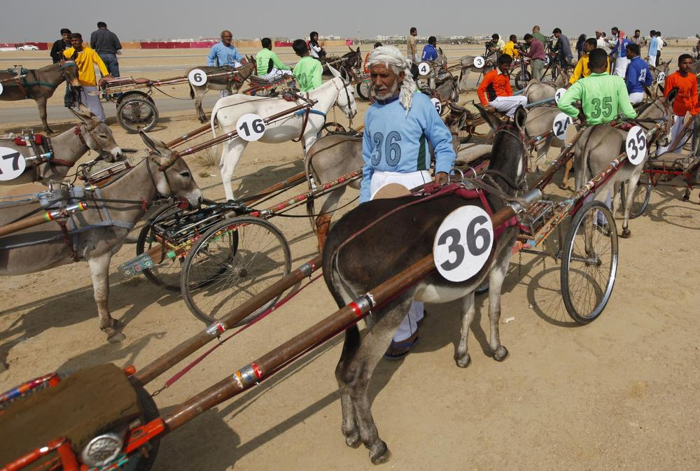 The Donkey Deby was held as part of the Sindh Festival organised by the provincial government.