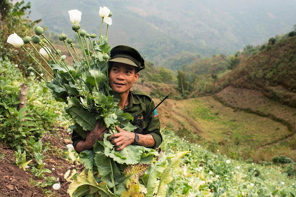 <p>An officer with the Tang National Liberation Army (TNLA) holds a bunch of poppy flowers. Fifteen soldiers under his command destroyed a field of poppy plants in 40 minutes.</p>