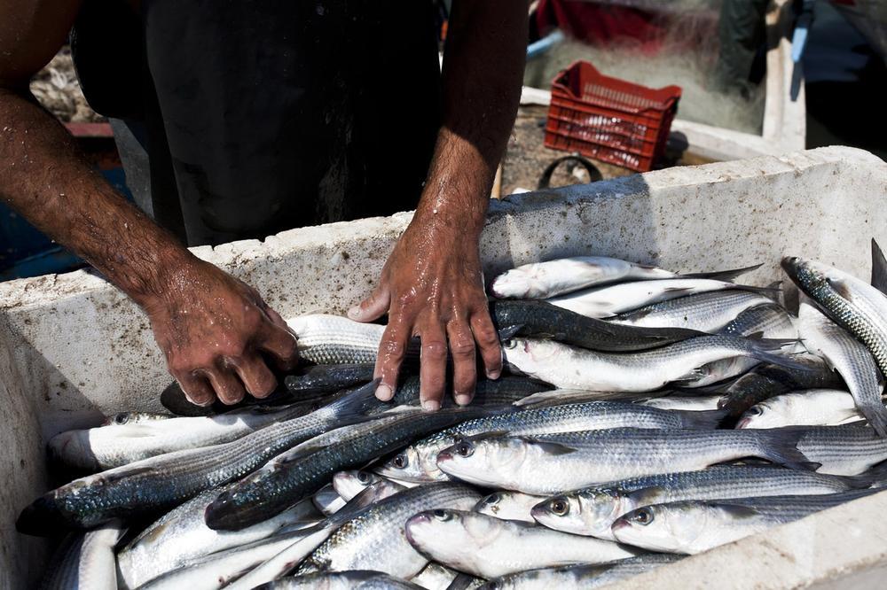 Image result for fishing in lebanon