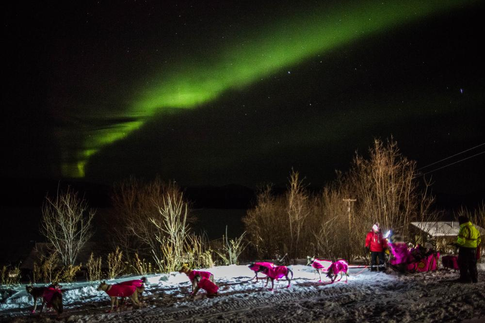 DeeDee Jonrowe arrives at the Ruby, Alaska checkpoint under the Northern Lights during the Iditarod Trail Sled Dog Race on Wednesday, March 11, 2015.