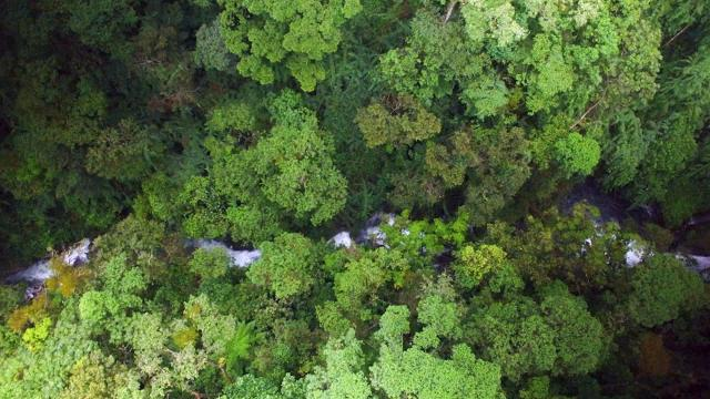 Costa Rica struggles to regrow forests