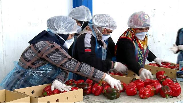Qatar blockade: Surge in food imports from Iran | Iran News