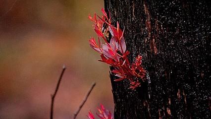 Australia bushfires: Heavy rains bring relief, pollution warnings thumbnail
