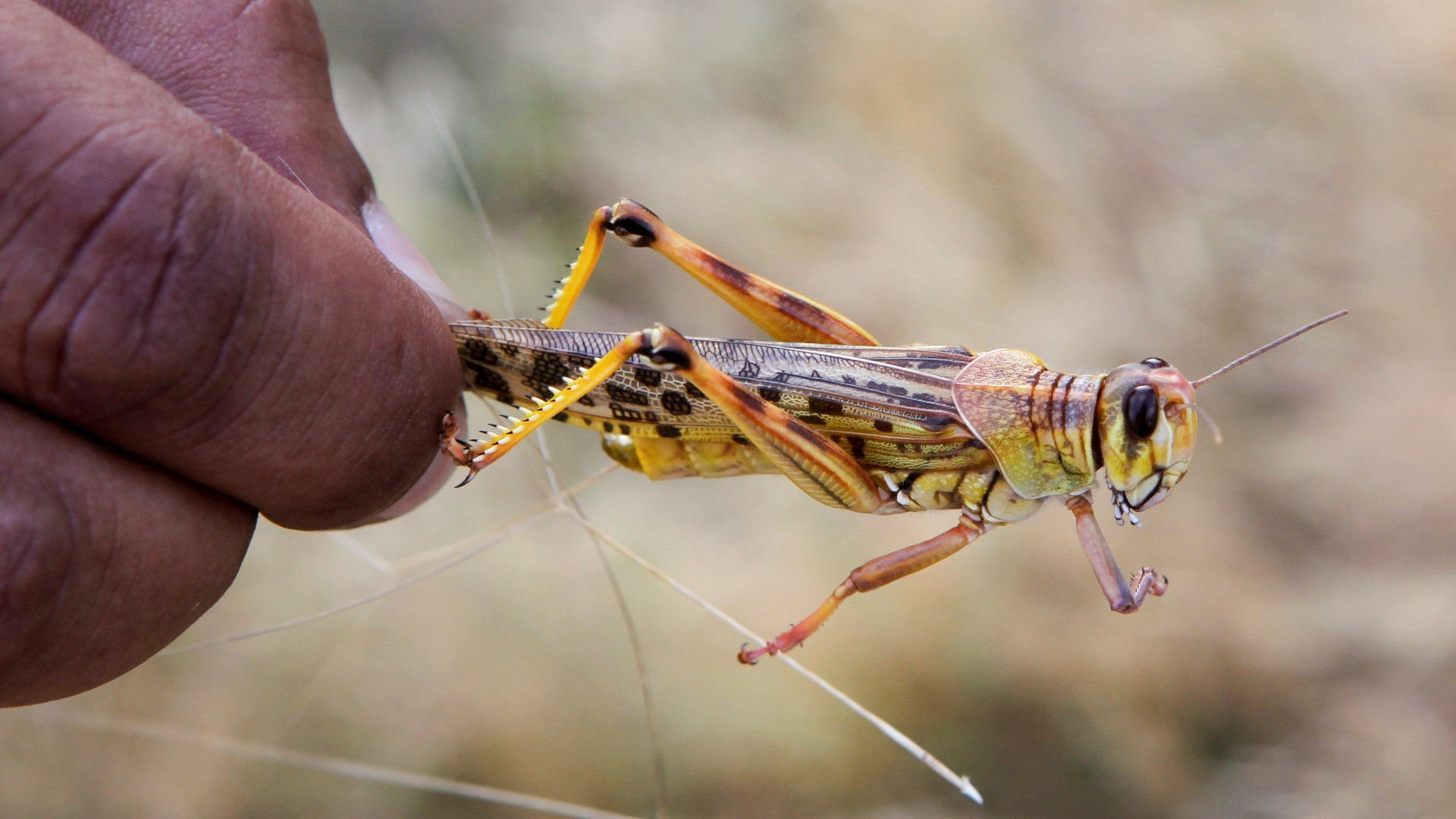 Kenya locust threat: Fears second wave will be worse for harvests ...