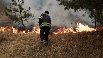Ukraine: Air pollution from forest fires also fuels isolation thumbnail