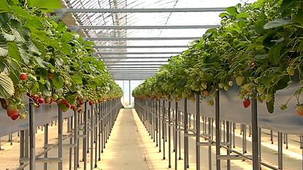 South Korean farmers embrace hi-tech methods thumbnail
