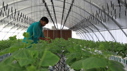 Qatar food security: Doha becomes less reliant on imported goods thumbnail