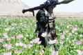 Afghanistan is the world's largest supplier of illegal drugs