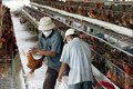 Bird flu fears have led to irrational import bans