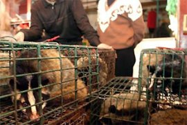Civet cats remain on sale in Chinese markets despite a total ban imposed in the wake of SARS