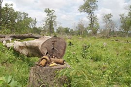 Global Witness says illegal logging threatens to wipe out Cambodia's reminaing forests [EPA]