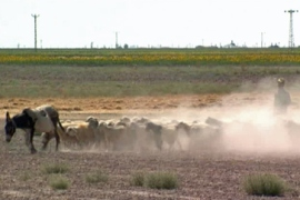 Video: Turkey's drought damage