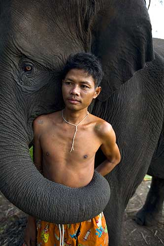 BANGKOK, THAILAND - SEPTEMBER 26: Sangworn, a mahout (elephant driver), stands with his elephant, Bussaba, 13 years old, at his temporary camp September 26, 2008 in Bangkok, Thailand. While the elephant is a symbol of Thailand, it is a fairly common site to see the unemployed and homeless animals roaming the city streets begging for food. The tame elephants dodge the traffic as their mahouts (elephant drivers) sell sugar cane by the bag to tourists who then feed them. Mahouts say that they have little choice but to bring their elephants to cities like Bangkok and Chiang Mai. Thai officials frown upon the practice and have passed laws banning elephants from roadways but the mahouts still come risking fines in order to survive.  Elephants have been big business for the country for centuries but now they are reduced to a major tourist attraction. Elephants are trained to paint, play musical instruments, and even kick soccer balls. In addition there are elephant camps dotted all over Thailand catering to tourists employing up to 650 pachyderms, according to government figures. The Tourism Authority of Thailand says that about 65 percent of tourists will visit an elephant during their stay. Until Thailand banned logging in 1989, many Asian elephants were laborers working in the jungles.  (Photo Paula Bronstein/Getty Images)