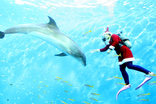 Santa swims with dolphins in Japan.