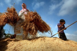 Going organic: The siege on Gaza