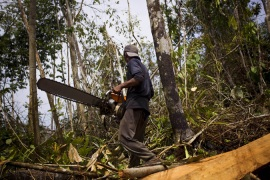 A logger illegally cuts trees in a tropical rain forest in Sumatra, Indonesia [Getty Images]