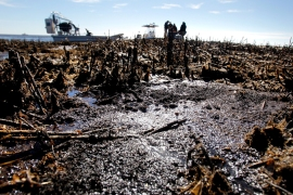 One year after the BP oil spill
