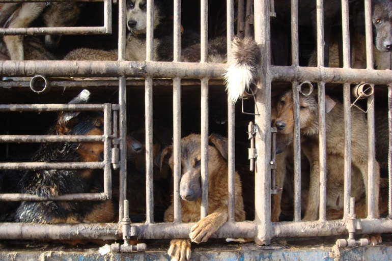 China(***)s animal protection law was drafted in 2009, but has still not been implemented