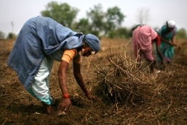 India's food security emergency