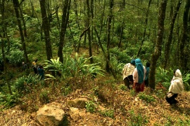 Nepal's Forest Future