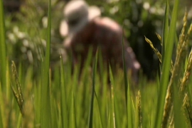 US farm harvests hope for ending world hunger