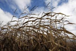Warming temperatures will have major effects on global food supply, according to a new IPCC report [Reuters]